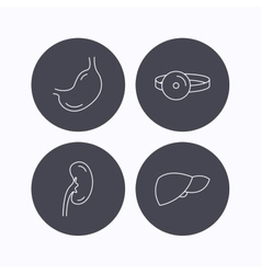 Kidney liver and stomach organ icons vector
