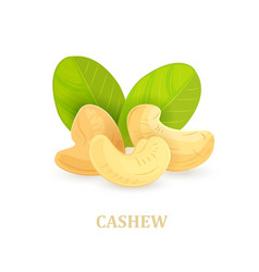 group of cashews with leaves on white background vector image