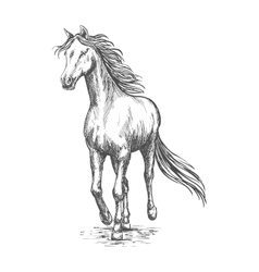 Horse gallop running Pencil sketch portrait vector image