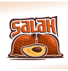 salak fruit vector image