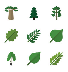 Flat icon natural set of leaves baobab linden vector