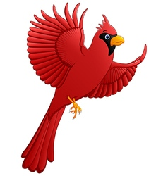 flying cardinal cartoon vector image