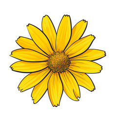 open heliopsis blossom top view sketch style vector image vector image