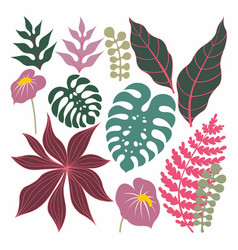 Tropical plants and leaves set vector