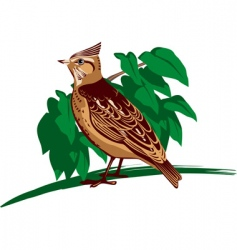 crested lark vector image vector image