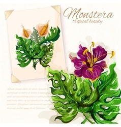 Monstera leaves with hibiscus flowers design vector