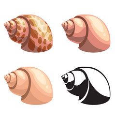 set of shells vector image vector image