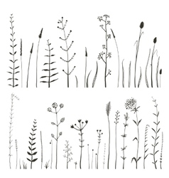 Sketchy wild field flowers and grass on white vector