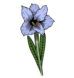 blue lily flowers vector image