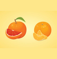 Collection of fresh ripe oranges and vector