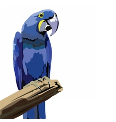 Colorful parrot on a branch vector image
