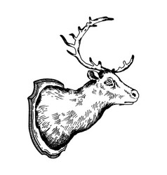 deer head trophy engraving vector image