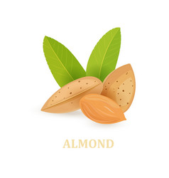 group of almonds with leaves on white background vector image