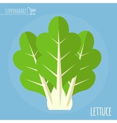 Lettuce icon vector image vector image