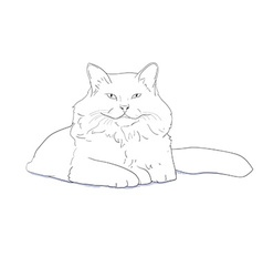 White furry cat on white vector