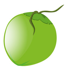 green coconut on white background vector image
