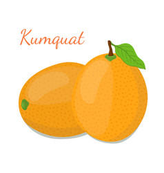 Kumquat setexotic fruitcartoon flat style vector