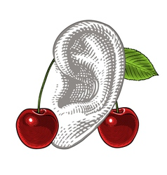 Cherries on ear in vintage engraving style vector