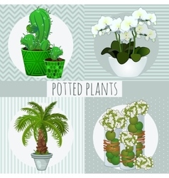 Four different green plants in pots vector