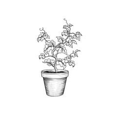 floral pot decorative bonsai tree isolated plant vector image