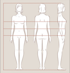 Womens body measurements vector
