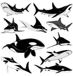 Set of various sharks tattoo vector