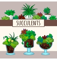 Succulents in pots vector