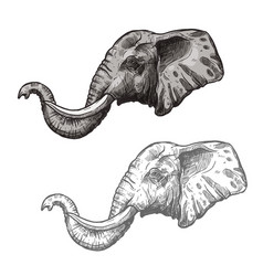 Elephant african wild animal sketch icon vector