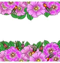Floral background with flowers rosehip vector