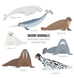 Marine mammal set Walrus narwhal harp bearded vector image