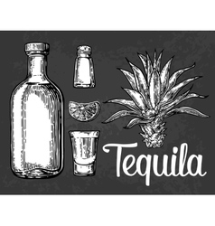 Glass botlle of tequila cactus salt lime vector