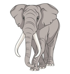 Color image of an elephant vector image