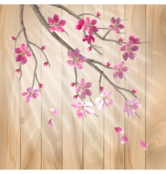 Spring cherry blossom flowers on a wood texture vector image