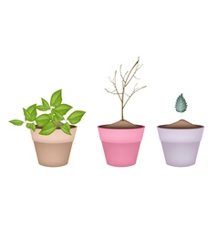Lovely green and dry plants in flower pots vector