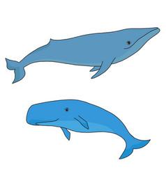Cartoon sea whale and cachalot vector