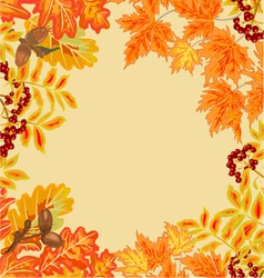 Frame from autumn leaves rowan berry and maple vector