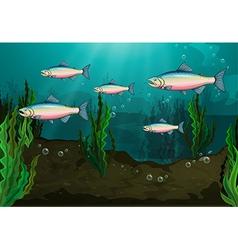 A school of fish vector