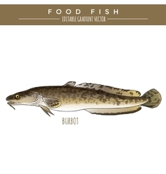Burbot marine food fish vector
