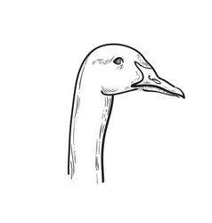 Hand draw sketch goose vector