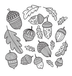 acorns and oak leaves vestor set in boho style vector image