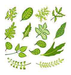 green bright leaf collection vector image vector image