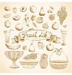 Sketches of juicy fresh fruits vector