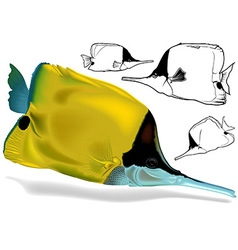 Longnosed butterflyfish set vector
