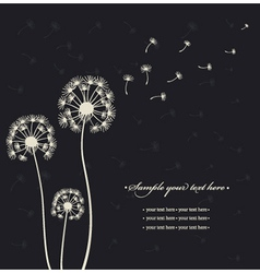 Dandelions on the black background vector image