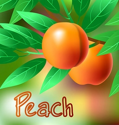 Orange juicy sweet peach on a branch for your vector image