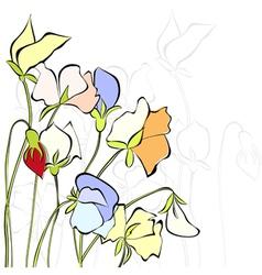 Sweet pea flowers vector image