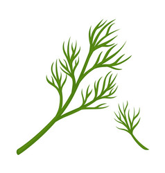 Green dill branch vector