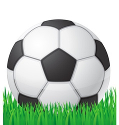 Football soccer ball in grass vector