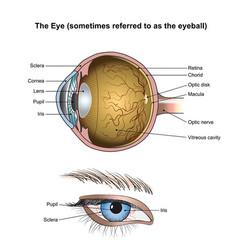 The eye vector