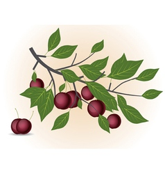 Red plum branch vector